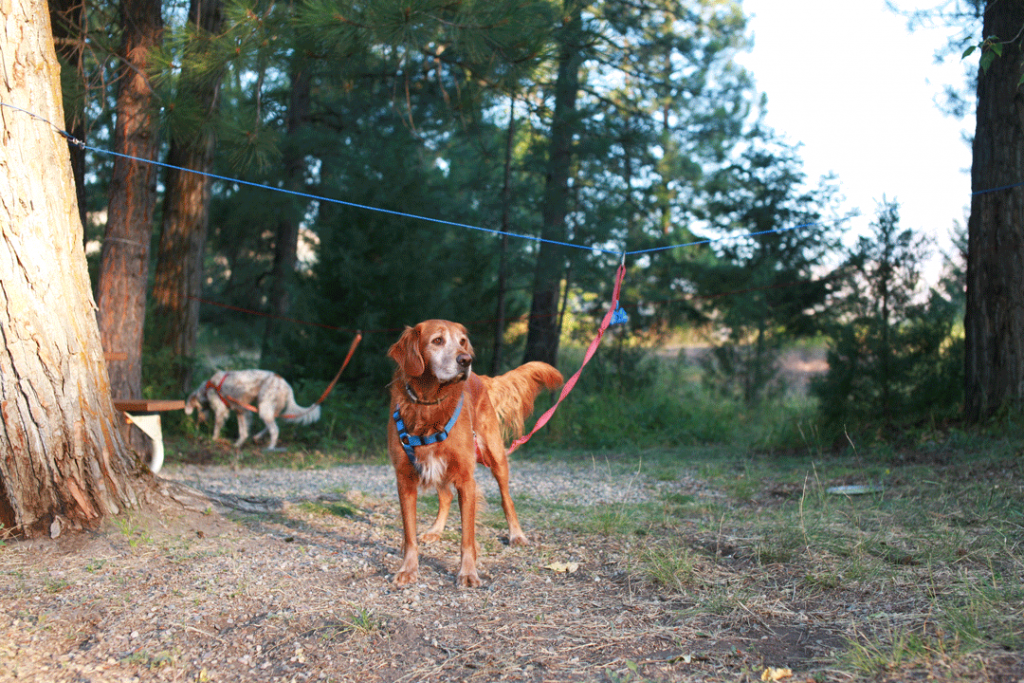 7 Things You Need to RV with Dogs