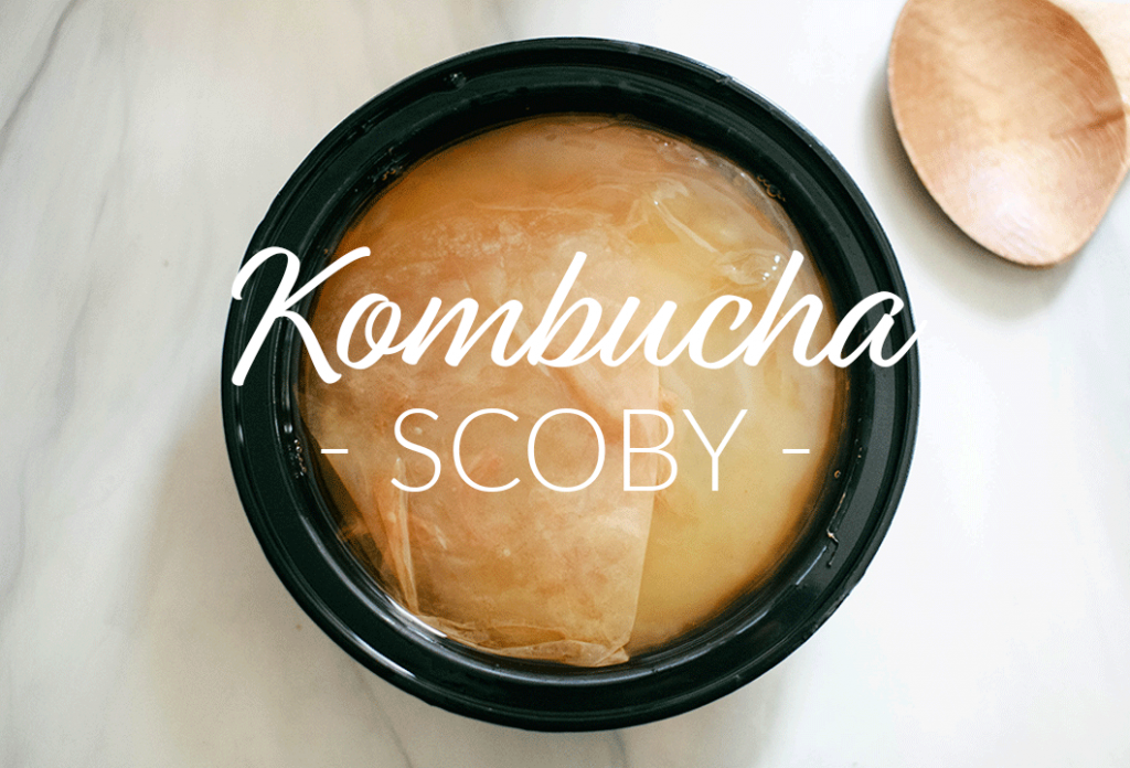 Everything you need to make kombucha at home